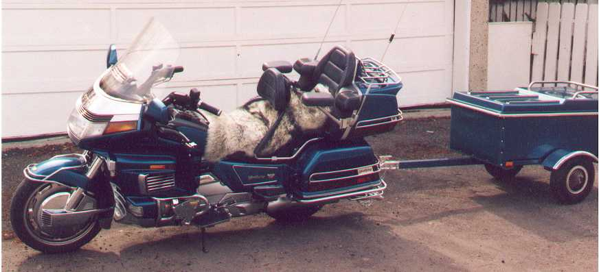 1992 Honda Goldwing GL1500 and cargo trailer